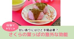 桜の季節です! お花見やさくら餅以外に、なにを思い浮かべますか?