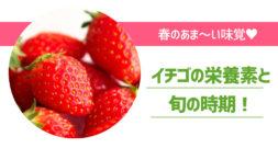真っ赤でおいしそうな大人気の果物の旬をご存じですか?~イチゴ~
