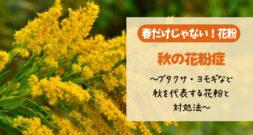 またこの季節がやってきました~秋の花粉症の原因と注意点~