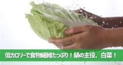 冬の野菜の代表格!実はすごく低カロリーなんです~白菜~